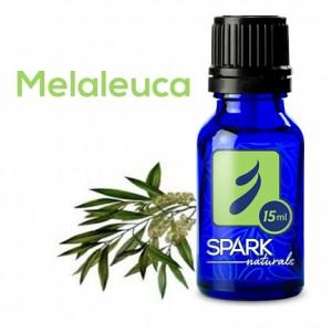 melaleuca2